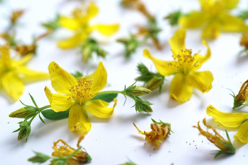Zastosowanie ziela dziurawca jest bardzo szerokie. Z kwiatów można zrobić napar i herbatkę na przeziębienie i problemy trawienne