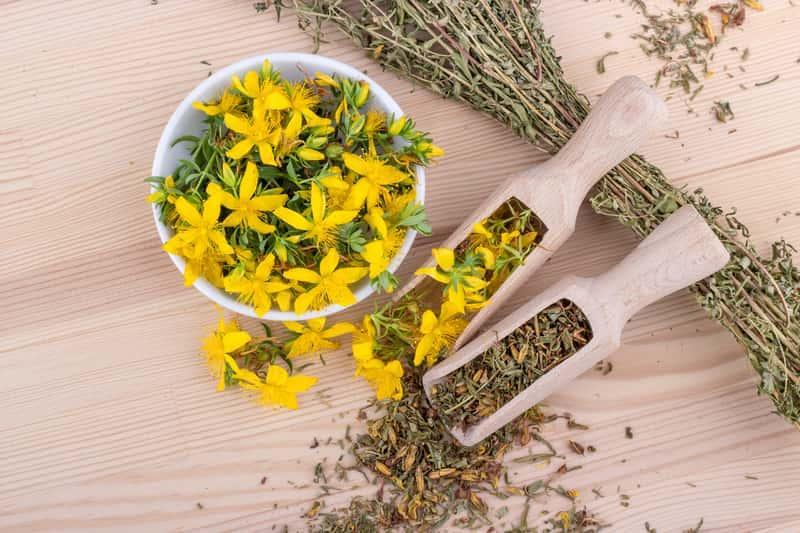 Przygotowanie kwiatów dziurawca do zaparzania - zastosowanie, wykorzystnie, działanie oraz właściwości lecznicze - porady
