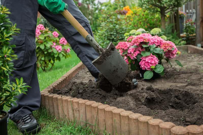Sadzenie hortensji do świeżej ziemi z dodatkiem torfu, a także informacje o rodzaju podłoża, odczynie pH i zasobności gleby dla rośliny