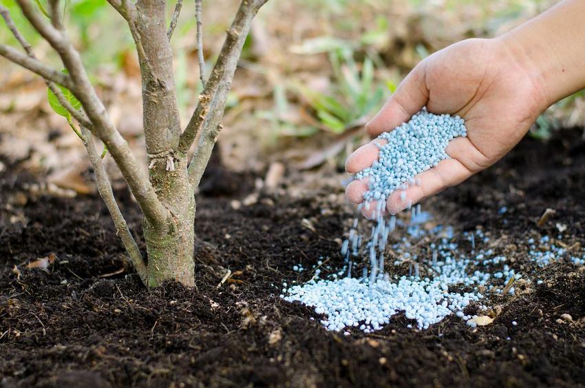 Najlepszym momentem na stosowanie nawozów fosforowych jest jesień. Można zrobić to na dwa sposoby. Nawóz fosforowy podaje się raz w roku w dużych ilościach.