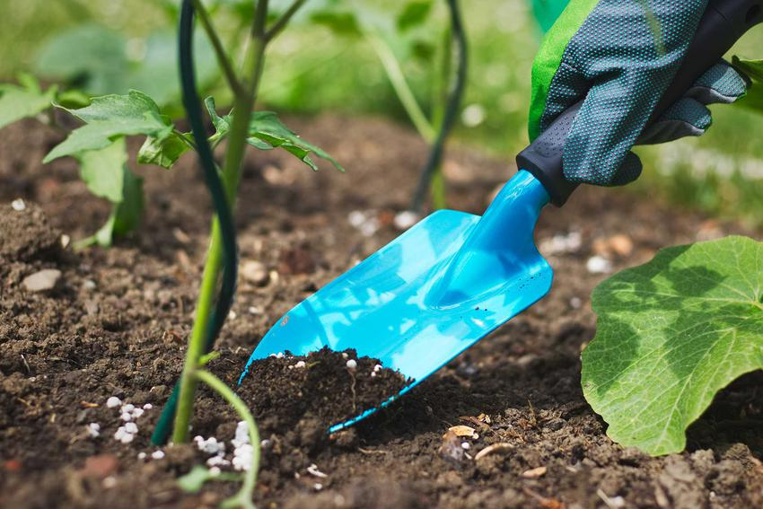 Zastosowanie nawozów potasowych jest bardzo uniwersalne. Nawozy potasowe nadają się do nawożenia krzewów, kwiatów, warzyw i drzewek owocowych.