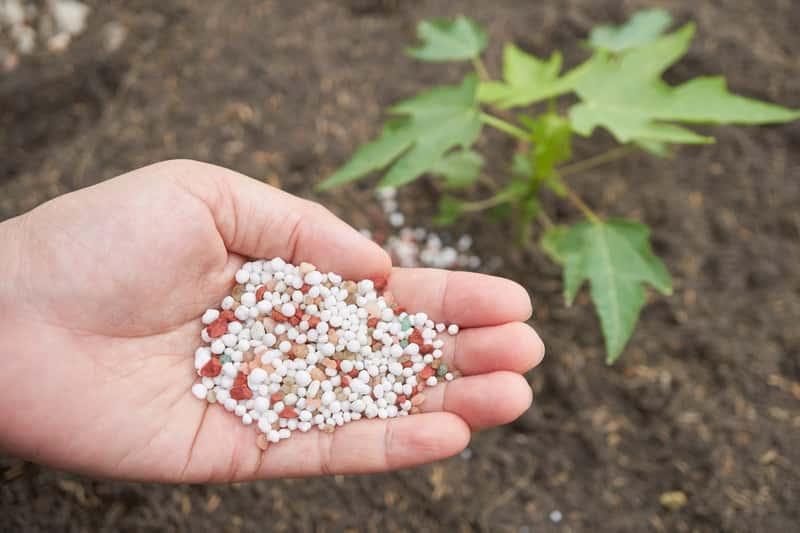 Granulki nawozu wieloskładnikowego, czyli rodzaje, zastosowanie do warzyw, roślin i krzewów ozdobnych, kiedy używać, ceny - porady