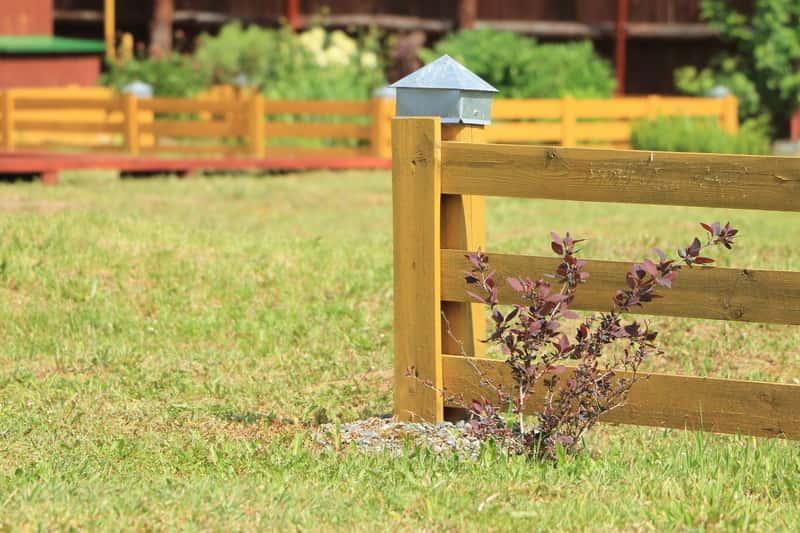 Krzew berberysu kolumnowego (łac. Berberis thunbergii} w ogrodzie, czyli odmiany, warunki uprawy, sadzenie, pielęgancja oraz zastosoawanie