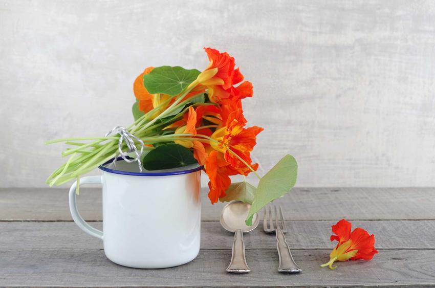Nasturcja niska to nasturcja jadalna. Jej piękne, ciekawe kwiaty mogą być dodawane do potraw, są także ozdobą wielu kuchni.