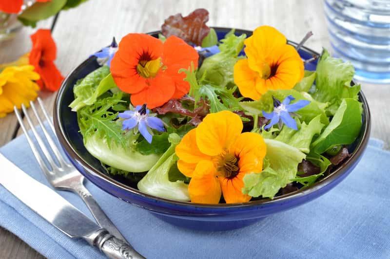 Sałatka z nasturcją jadalną, gatunki, rodzaje, warunki uprawy, wymagania oraz właściwości i zastosowanie