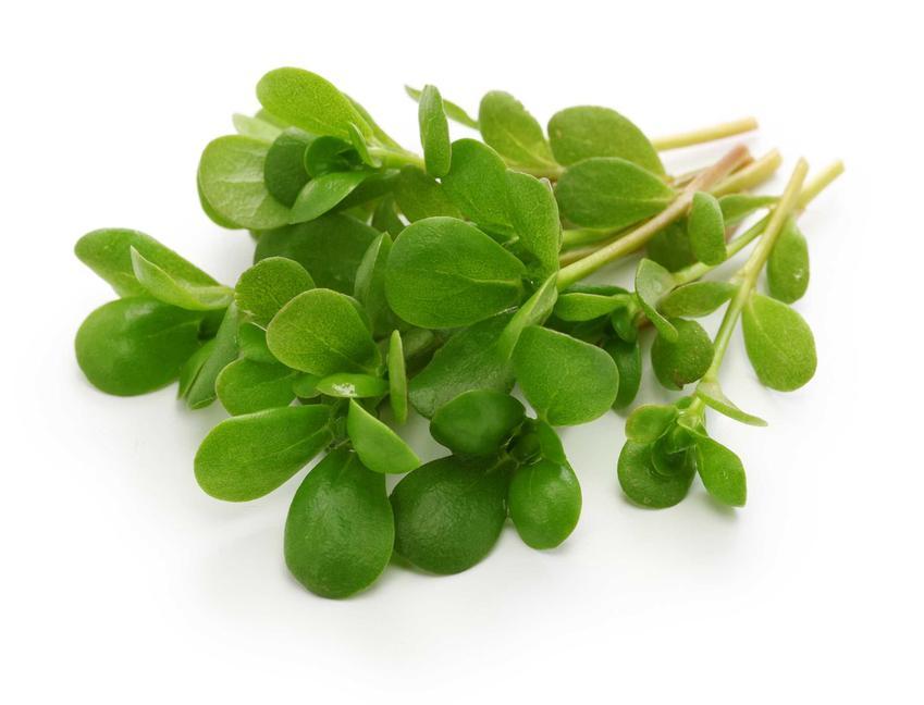 Portulaka warzywna to ciekawy rodzaj sałaty, nadający się do wielu różnych dań. Można uprawiać ją w ogrodzie, pielęgnacja nie jest szczególnie trudna.