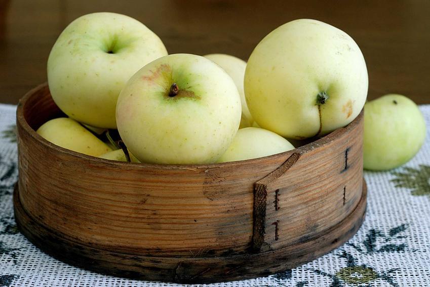Jabłka papierówki, czyli Oliwki Żółte, są bardzo smaczne. Ich uprawa jest łatwa, a owoce są bardzo smaczne, mają soczysty miąższ.