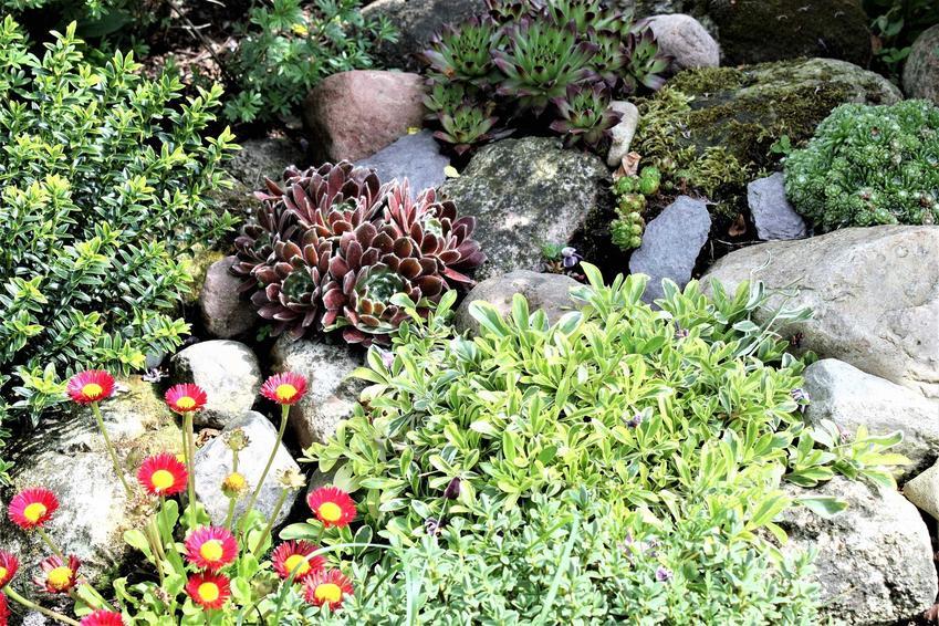 Skalniaki przydomowe świetnie się sprawdzają w ogrodzie. Zakładanie skalniaka nie jest trudne, ani nie wymaga zbyt dużych nakładów finansowych.