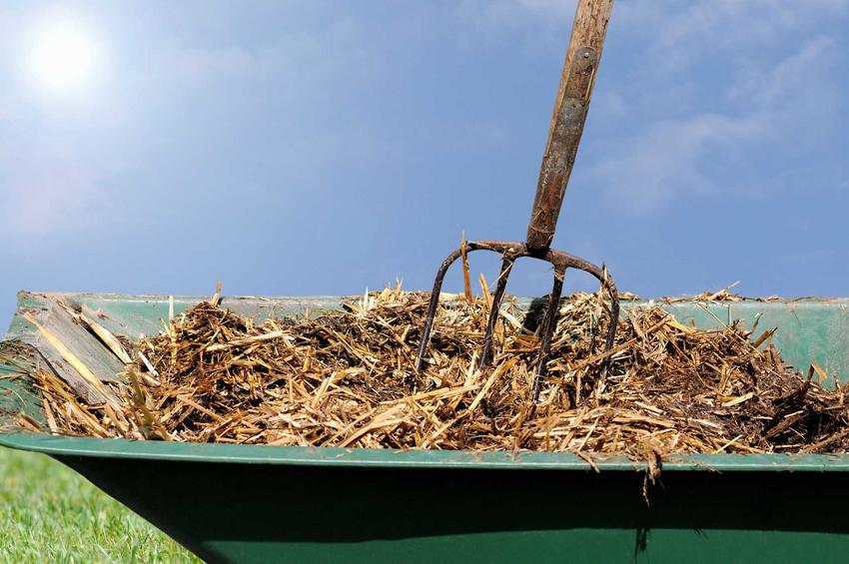 Obornik w ogrodzie to podstawowy środek nawozowy. Jest zasobny w azot, zatem można go zastosować do bardzo wielu roślin.