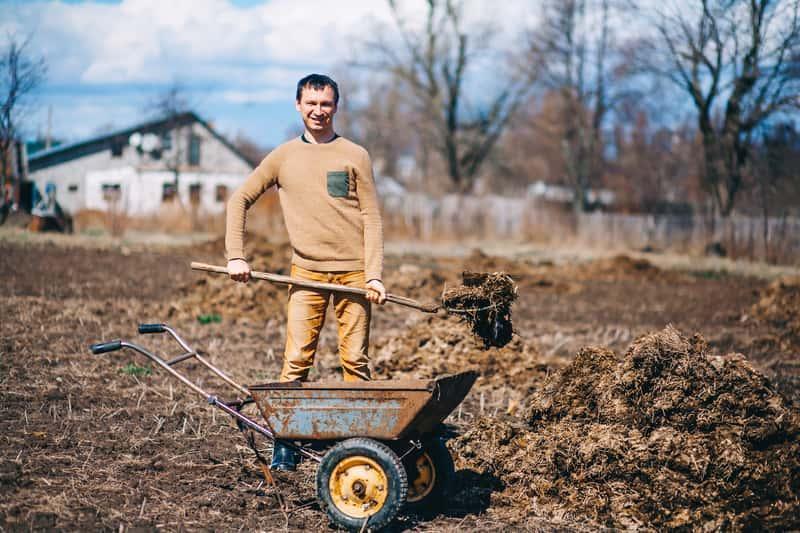 Obornik - doskonały nawóz dla roślin, rodzaje, gatunki, wykorzystanie, zastosowanie obornika w uprawie roślin ozdobnych i warzyw