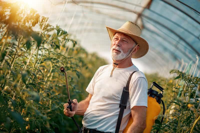 Fungicydy używane przez starszego mężczyznę do oprysków roślin uprawnych w szklarni, a także rodzaje, polecane środki, najważniejsze informacje