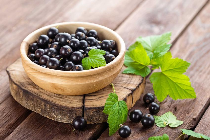 Owoce czarnej porzeczki mają dużo witamin i właściwości leczniczych. Owoce świetnie się sprawdzają na przetwory.