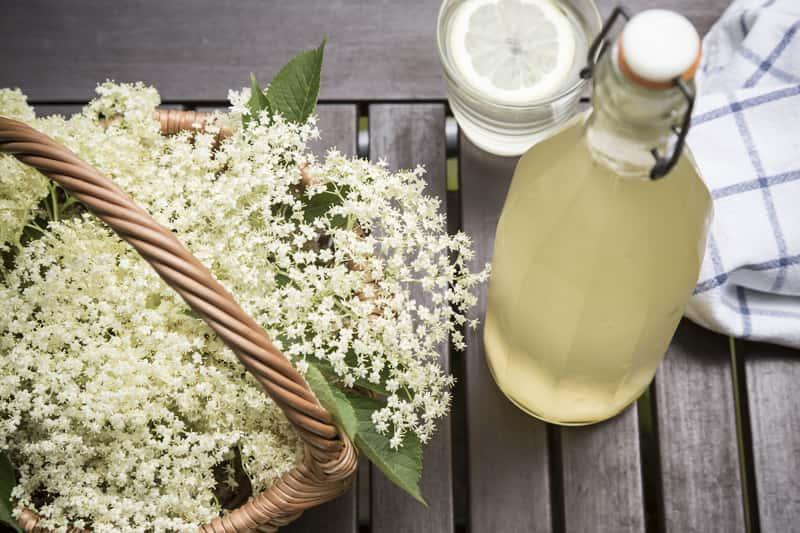 Sok z kwiatów bzu, a także przepisy na najlepszy sok z czarnego bzu, zarówno z owoców, jak i białych kwiatów bzu