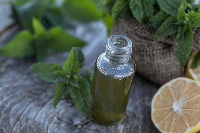 Sok pokrzywowy w butelce, a także przepis na sok z pokrzyw, wykonanie, zastosowanie i właściwości lecznicze