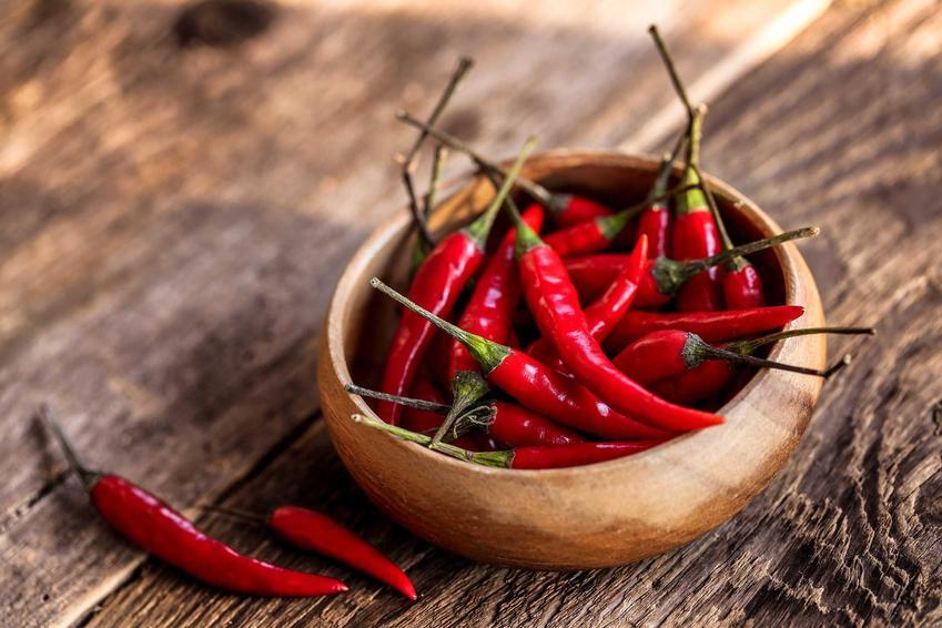 Papryczki chilli lezące w miseczce, a także sadzenie, nasiona, uprawa w ogrodzie, pielęgnacja i zastosowanie
