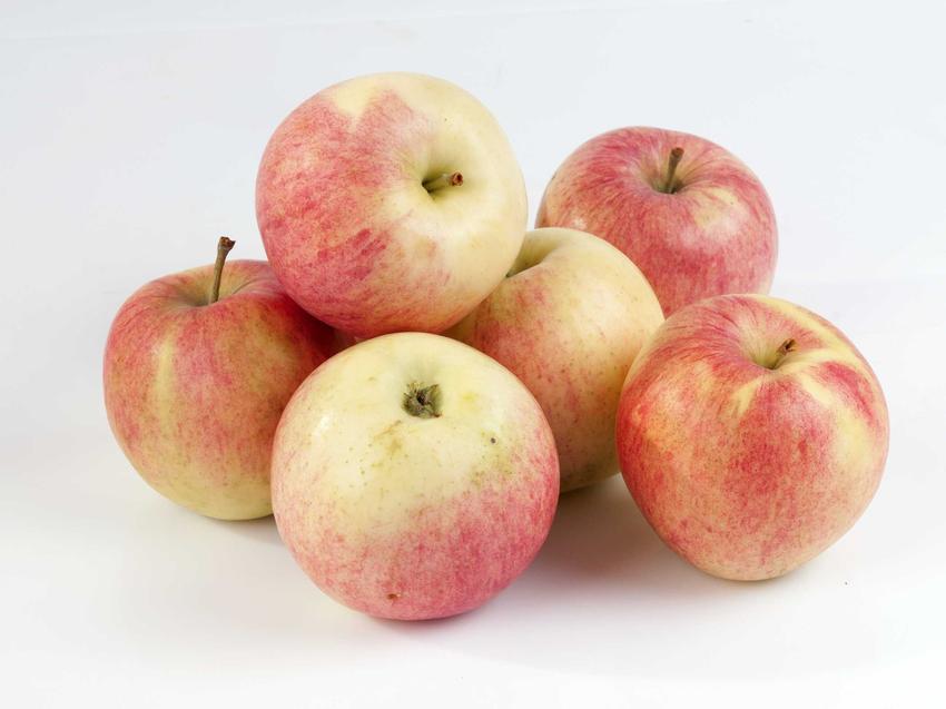 Zerwane owoce jabłoni Antonówka - charakterystyka, waraunki uprawy, wymagania, stanowisko, pielęgnacja, wykorzystanie - porady