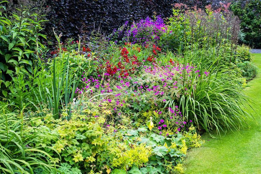 Byliny wieloletnie w ogrodzie, a także najpopularniejsze gatunki oraz odmiany bylin wieloletnich do posadzenia w ogrodzie krok po kroku