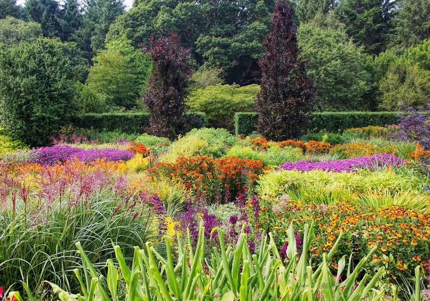 Ogród pełen bylin i krzewów, a także informacje o roślinach wieloletnich uprawiach w naszych warunkach klimatycznych