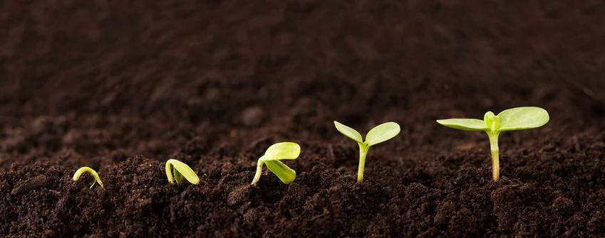 Sadzonki rosnące w ziemi, a także rozmnażanie wegetatywne roślin różnego ozdobnych i warzywnych krok po kroku
