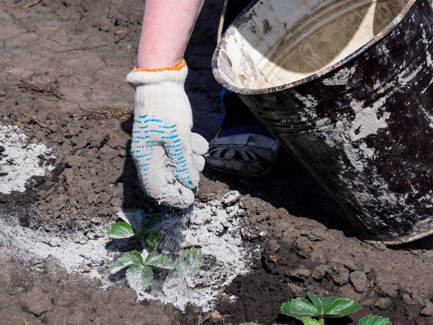 Dozowanie saletry potasowej w okresie wzrostu roślin - informacje oraz zastosowanie w ogrodnictwie i sadownictwie - porady