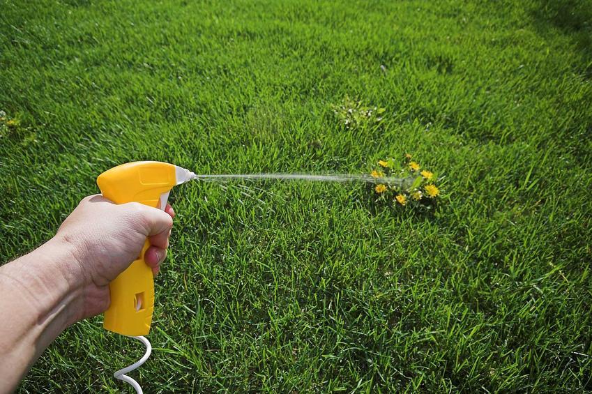 Herbicydy w ogrodzie na trawniku, czyli opryski i środki do usuwania chwastów, w tym tych najbrdziej popularnych