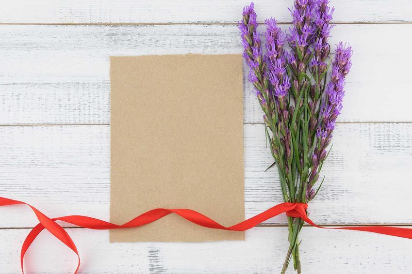 Fioletowy kwiat liatry kłosowej w czasie kwitnienia, której odmiany są bardzo ciekawe, a uprawa niezby skomplikowana