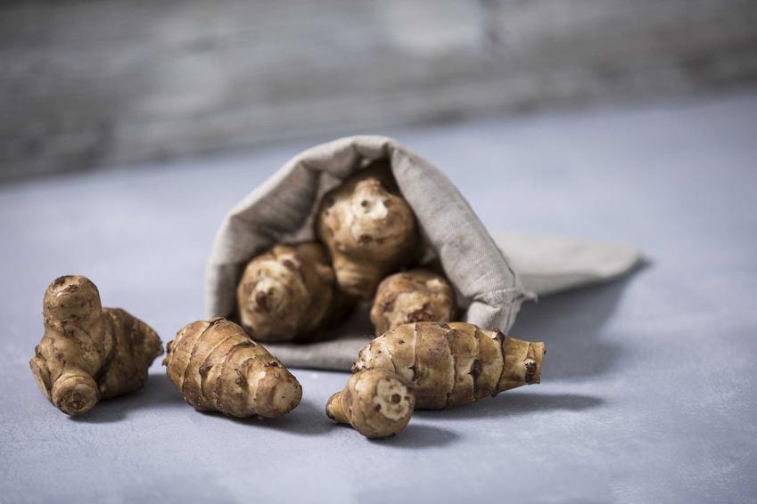 Topinambur, czyli inaczej nazywany słonecznik bulwiasty w jutowej torbie na stole. Uprawa topinamburu jest możliwa w przydomowym ogródku