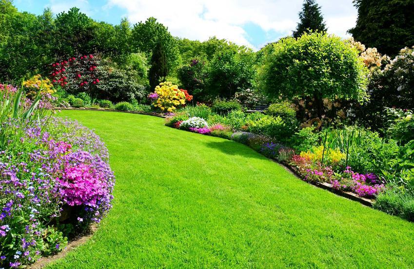 Piękny trawnik w ogrodzie, który jest już po zabiegu, jakim jest nawożenie trawnika oraz zastosowanie nawozów mineralnych i organicznych