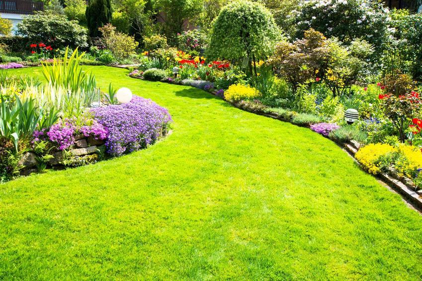 Piękna trawa, na której został zastosowany nawóz trawnikowy w celu przeprowadzenia nawożenia trawy wiosną