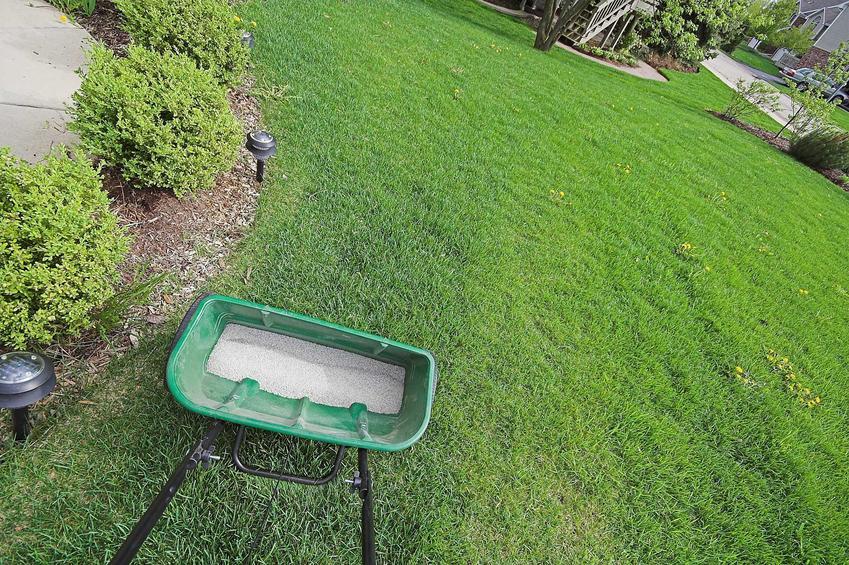 Nawóz do trawy rozsiewany specjalnym urządzeniem, by przeprowadzić nawożenie trawnika wiosną lub jesienią
