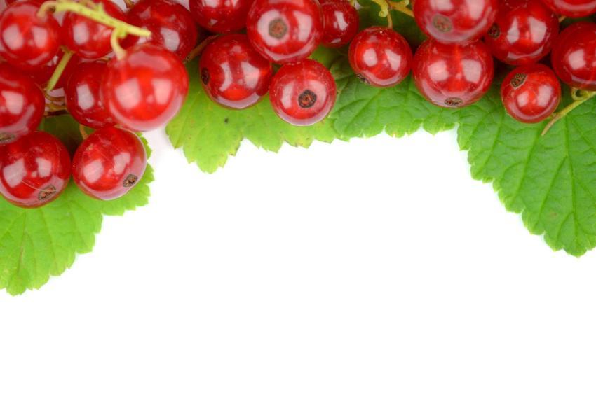 Owoce porzeczki alpejskiej, czyli ozdobnego krzewu, który warto zaporosić do ogrodu ze względu na jego walory dekoracyjne