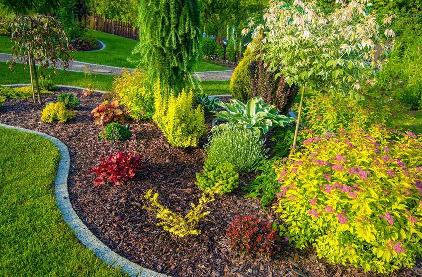 Wierzba karłowata czy też wierzba mandżurska w kompozycji roślin ogrodowych - opis, uprawa, przycinanie, pielęgnacja - krok po kroku