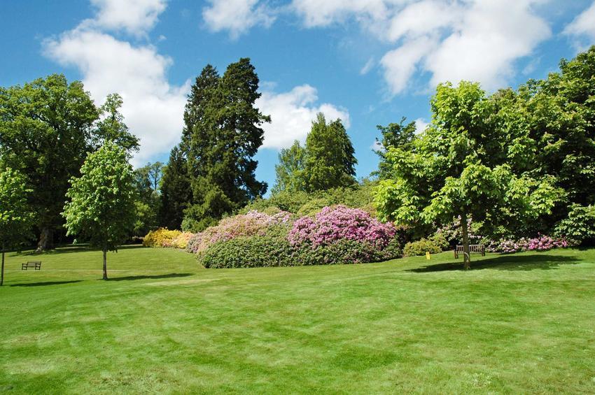 Wierzba sachalińska, zwana też sekka w ogrodzie wśród innych drzew, krzewów i roślin ozdobnych oraz jej pielęgnacja i uprawa