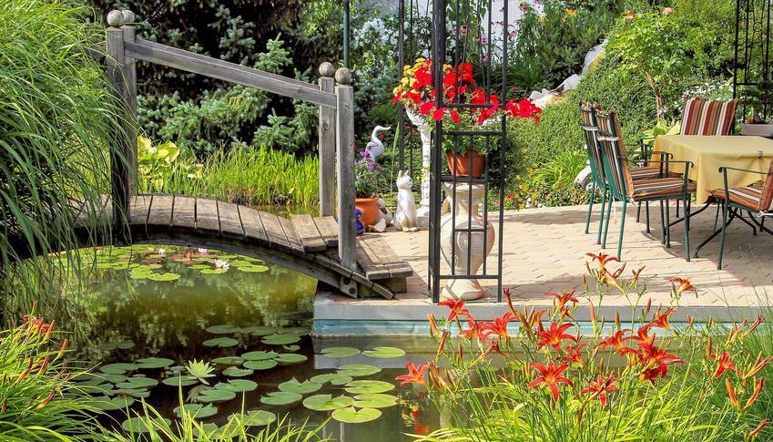 Piękny ogród z oczkiem wodnym i liliami wodnymi. Kwiaty lilie ogrodowe - odmiany i ich warunki uprawy, wymagania, sadzenie, pielęgnacja - porady