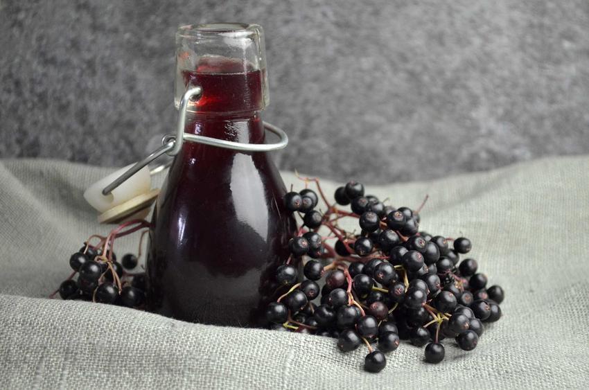 Wino z czarnego bzu w butelce w towarzystwie owoców czarnego bzu oraz najlepsze przepisy na domowe wino z bzu
