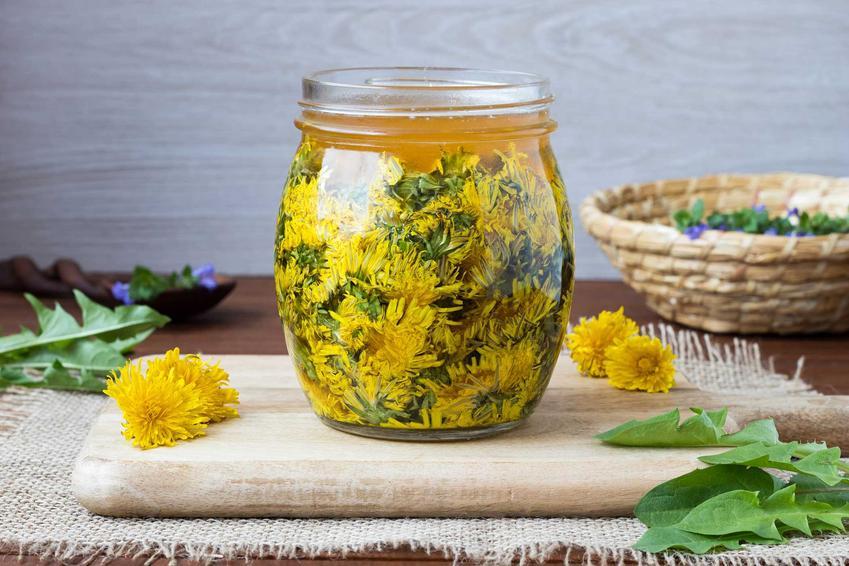 Nalewka z mniszka lekarskiego, a dokładniej z kwiatów mniszka z dodatkiem miodu podczas przygotowania