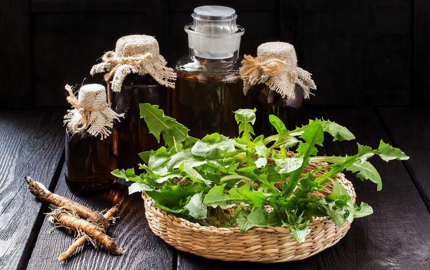 Nalewka z mniszka lekarskiego w ciemnych butelkach oraz liście i korzeń mleczu