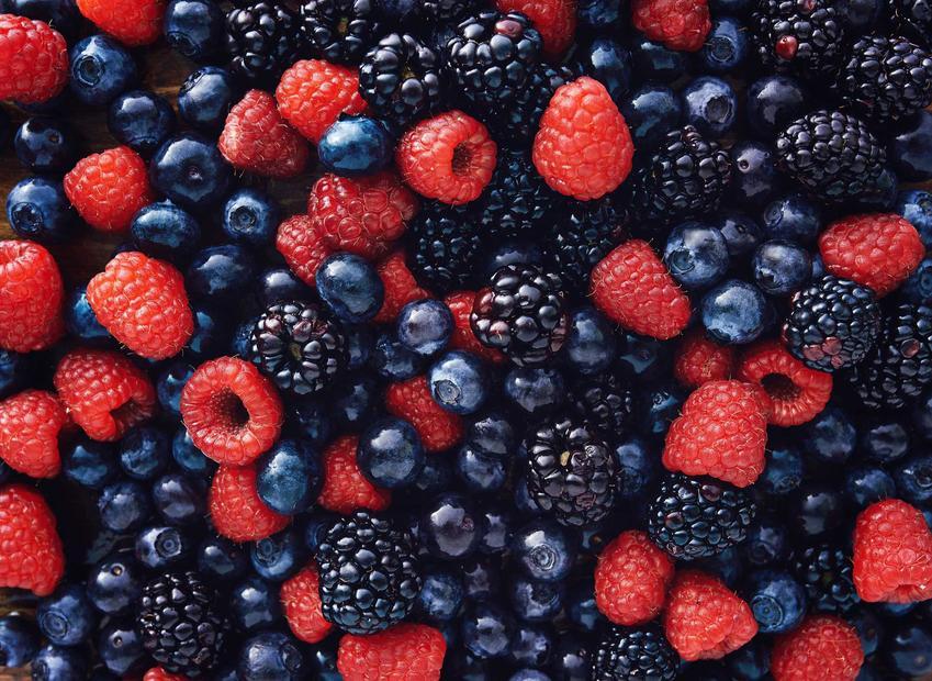 Owoce leśne oraz przepis na wino z owoców leśnych, w tym wino z jeżyn i malin, najlepsze przepisy, wykonanie, składniki