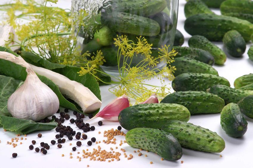 Ogórki w słoikach przygotowanie do kiszenia oraz najlepsze przepisy na kiszone ogórki w słoikach na zimę