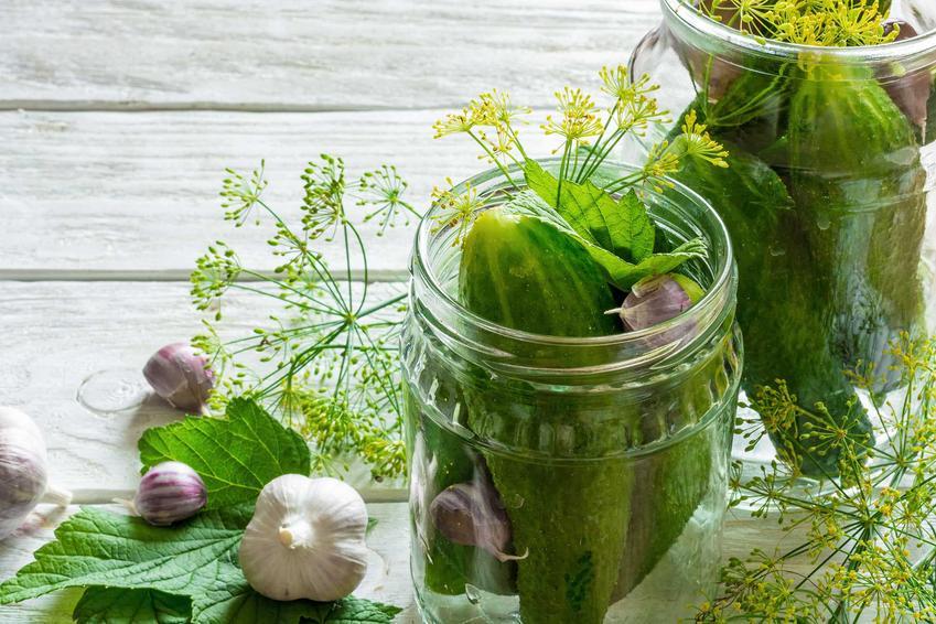 Ogórki kiszone w słoikach, a dokładniej przygotowane do kiszenia oraz liście porzeczki i wiśni do przygotowania smacznych kiszonych ogórków