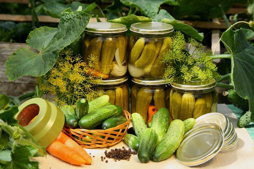 Ogórki konserwowe w słoikach oraz składniki na nie, a także najlepszy przepis na ogórki konserwowe w zalewie octowej lub innych zalewach i marynatach
