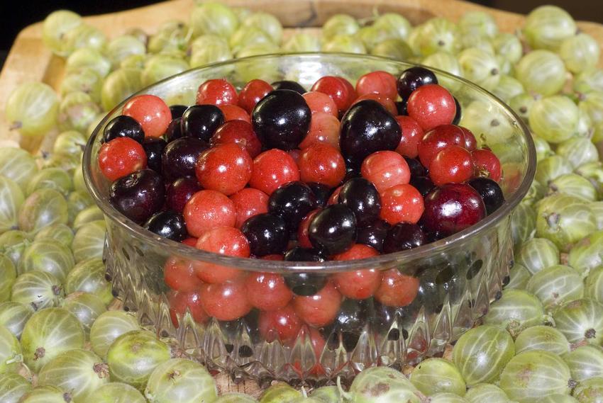 Agrest i porzeczki przygotowane na wino z agrestu i porzeczek oraz najlepsze przepisy na przetwory z agrestu i porzeczek