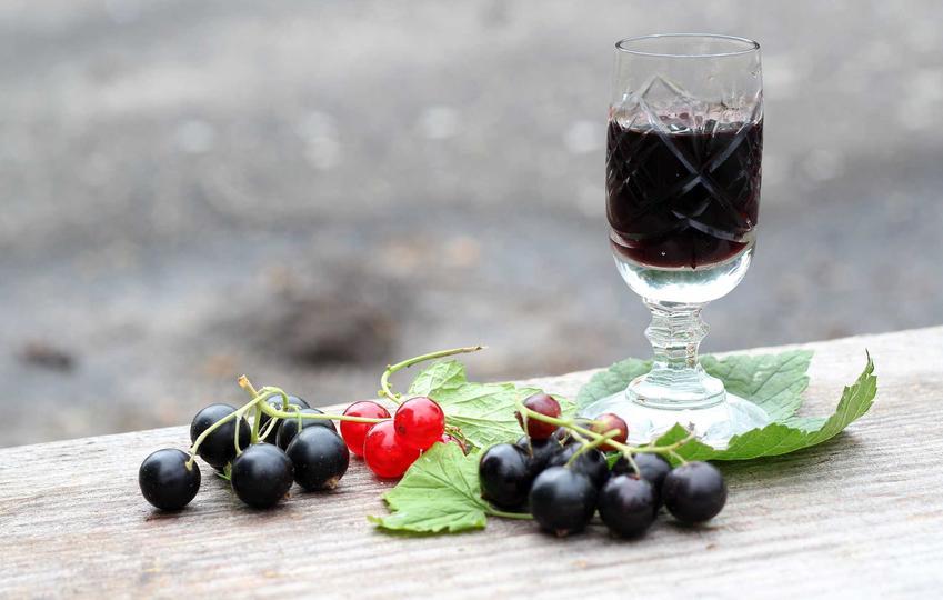 Wino z czarnej porzeczki w kieliszkach oraz owoce porzeczki, a także przepis na wino domowej roboty oraz najlepsze sposoby na domowe wino