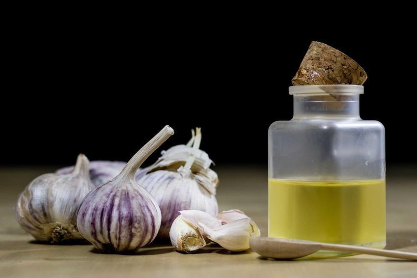 Nalewka czosnkowa w butelce z korkiem oraz świeży czosnek i przepis na nalewkę czosnkową na przeziębienie i grypę - najlesza receptura