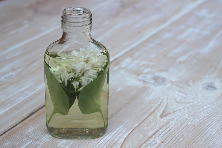Nalewka z kwiatu czarnego bzu w butelce oraz nalewka z czarnego bzu i jej właściwości lecznicze oraz zastosowanie