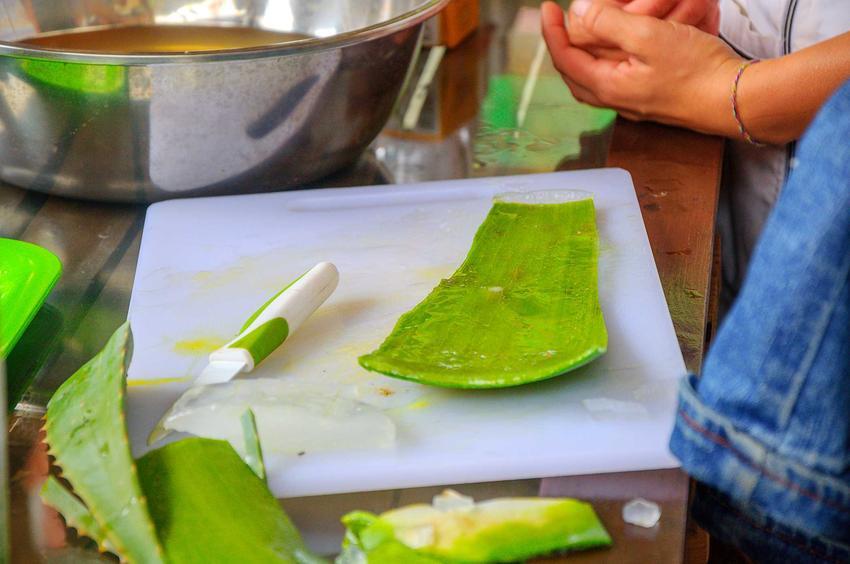 Nalewka z aloesu podczas jej przygotowywania, a także jej właściwości i zastosowanie oraz przepis na nalewkę z aloesu