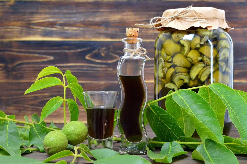 Nalewka z orzechów włoskich w trakcie przygotowywania oraz nalewka orzechowa i jej właściwości lecznicze