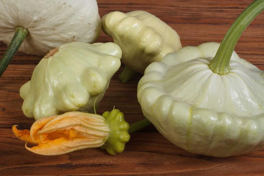 Świeże patisony gotowe na przetwory z patisonów, na przykład na patisony marynowane z chilli i nie tylko