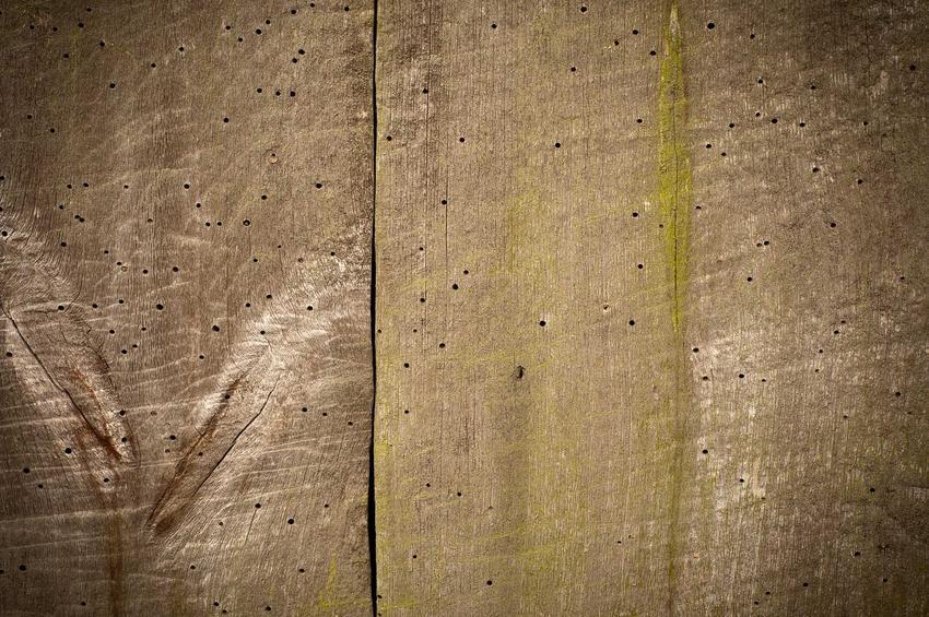 Szkodniki drewna w deskach oraz ich zwalczanie, a także najpowszechniejsze szkodniki drewna, objawy, zapobieganie