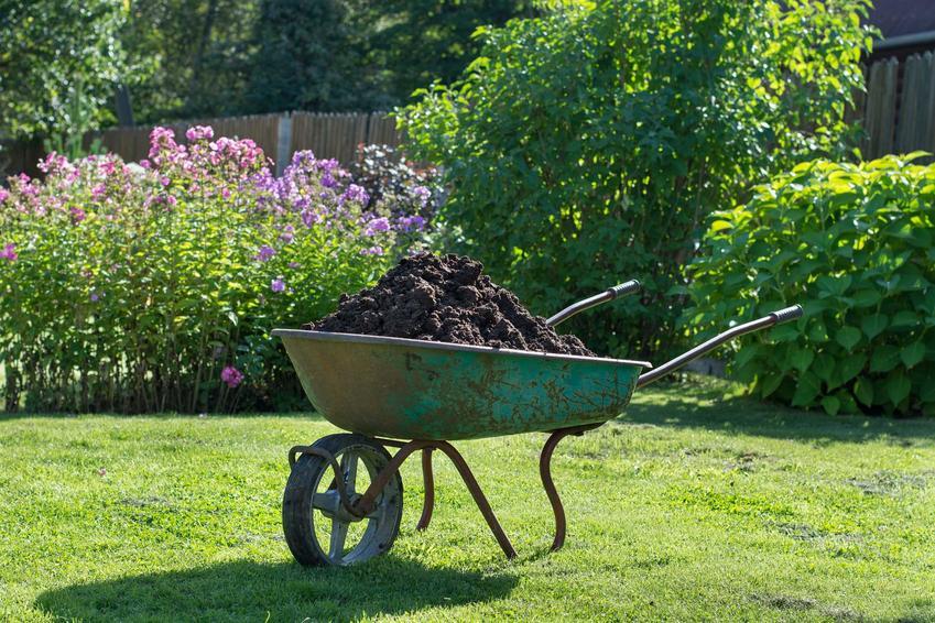 Nawożenie trawnika przy pomocy kompostu oraz polecane nawozy do trawy nie tylko organiczne